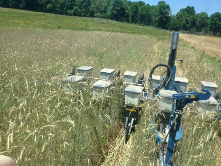 planting soybeans through rye cover crop